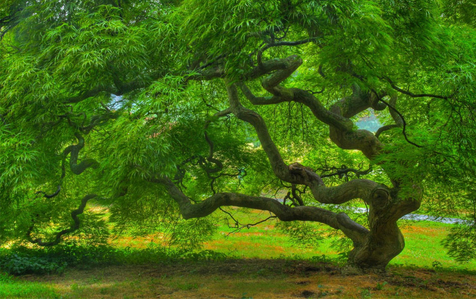 Nature Photography Summer Tree