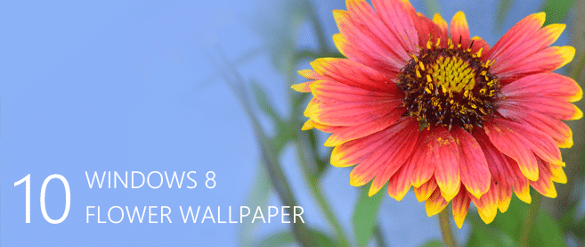 Desktop Wallpapers 10 Free Hd Flower Wallpaper For Windows8