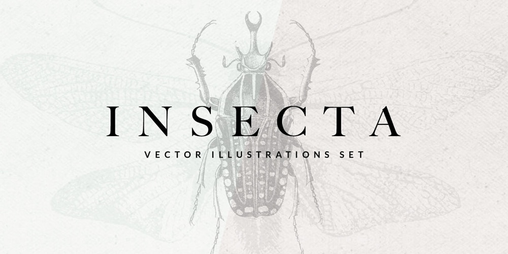 Insecta Vector Illustrations