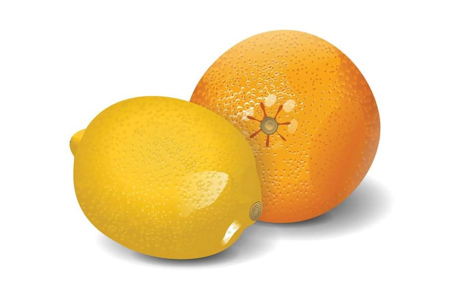Lemon & Orange Vector