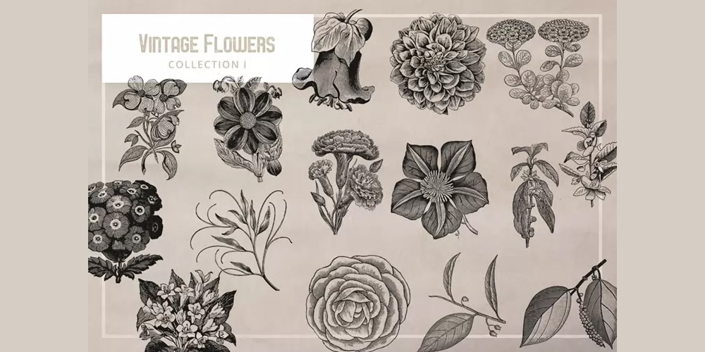 Vintage Flowers Graphics