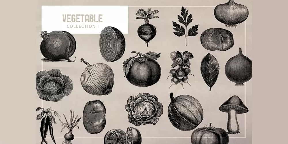 Vintage Vegetables Illustration