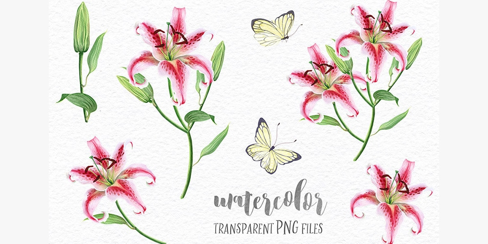Delicate Watercolor Lilies