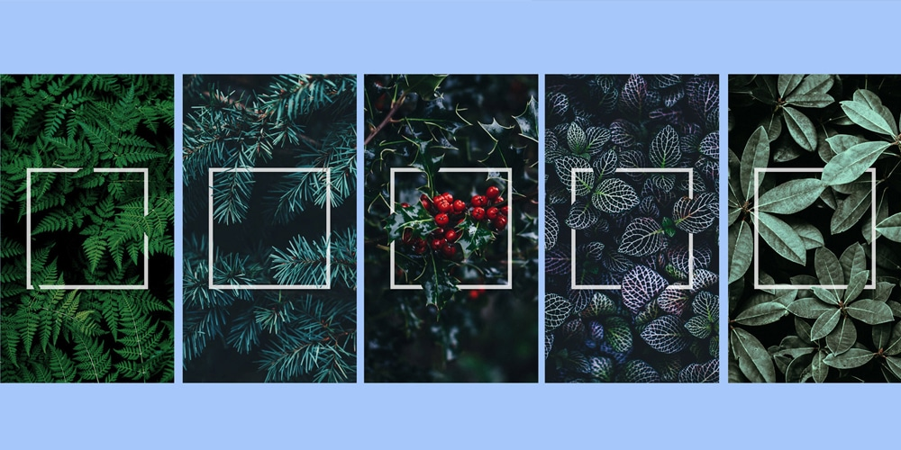 Plants Frame Instagram Stories Templates