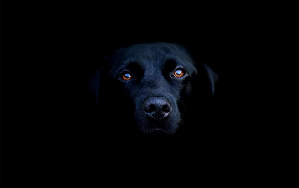 Black Dog in the Dark
